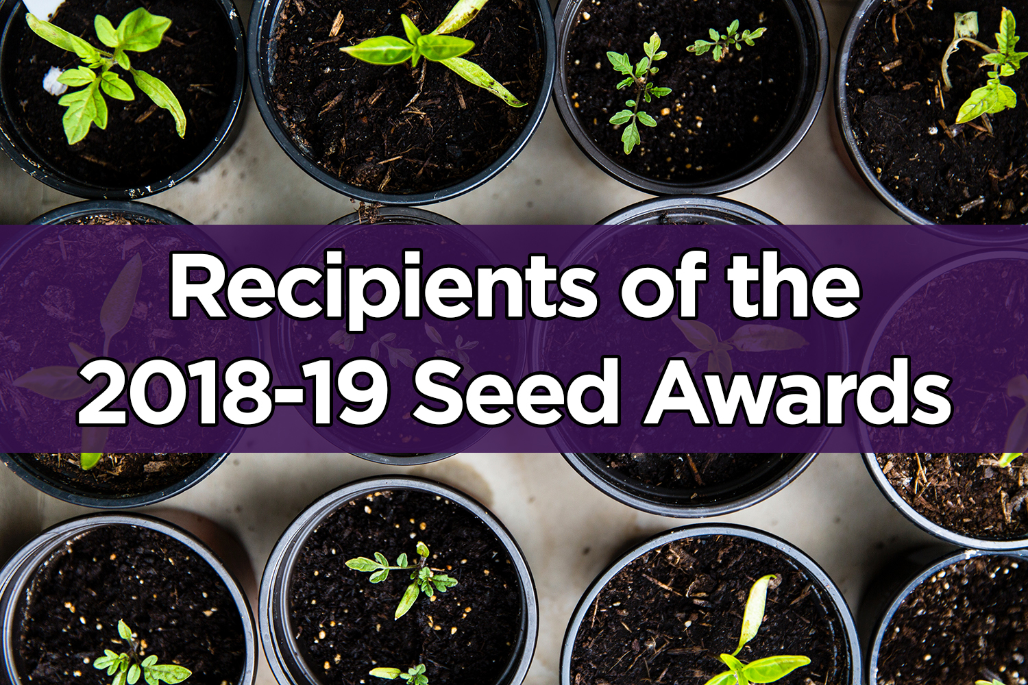 Dr. Brito is a 2018-2019 IHDSC Seed Award Recipient!